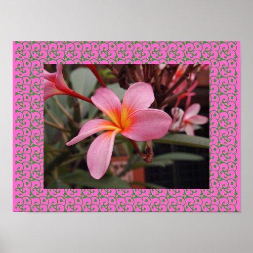 Hawaiischer Frangipani-glückselige BlütenPlumerias Plakatdruck