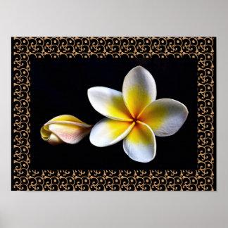 Hawaiischer Frangipani-glückselige BlütenPlumerias Poster