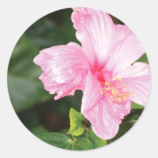 Hawaiischer Hibiskus Runder Aufkleber