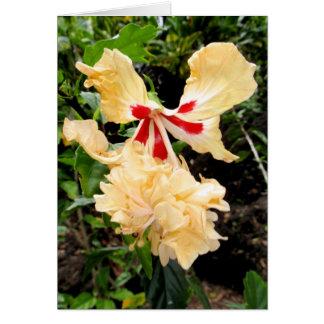 Hawaiischer hybrider Hibiskus Karte