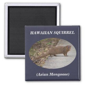 Hawaiischer quadratischer Magnet des Quadratischer Magnet