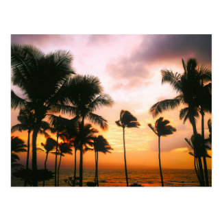 Hawaiischer Strand-Palme-Sonnenuntergang - Postkarten