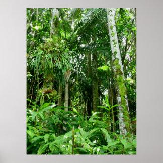 Hawaiischer tropischer Regenwald Plakat