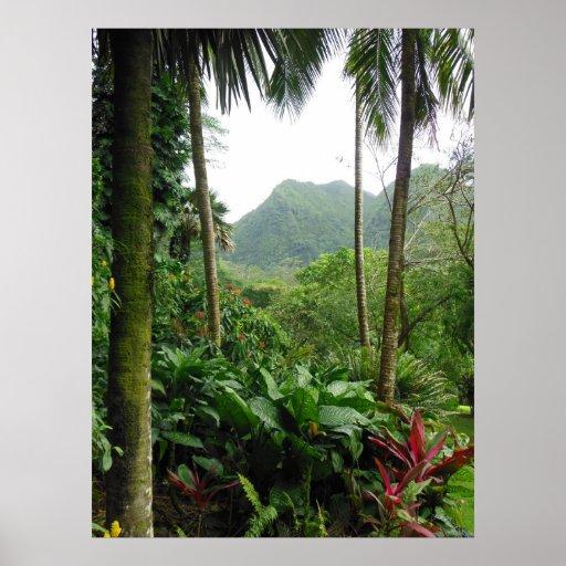 Hawaiischer tropischer Regenwald Plakate