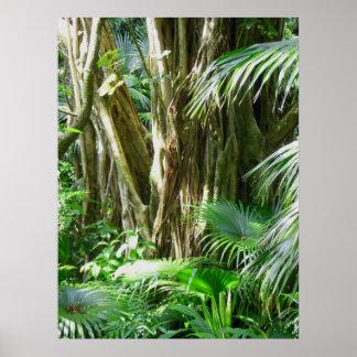 Hawaiischer tropischer Regenwald Poster