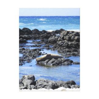 Hawaiisches ein Sonnenbad nehmendes Mönch-Siegel Leinwanddruck