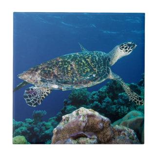 Hawksbill Meeresschildkröte-Great Barrier Reef Fliese