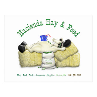 Hazienda-Heu u. füttert entspanntes Pferd Postkarten