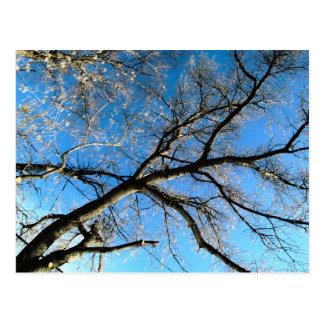 HDR-Baum Postkarte