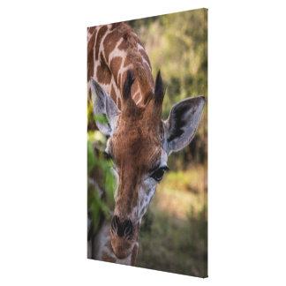 Headshot einer Giraffe Leinwanddruck