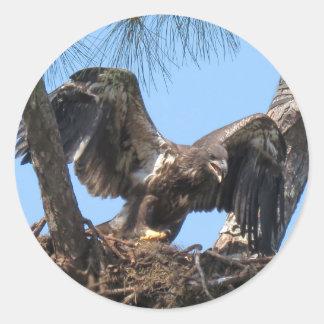 Heftige junge Eagle-Aufkleber Runder Aufkleber
