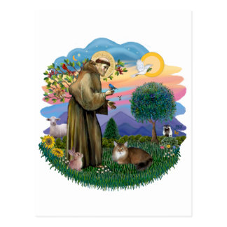 Heiliger Franziskus und somalische Katze Postkarte