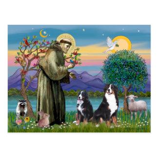 Heiliger Franziskus - zwei Bernese Gebirgshunde Postkarte
