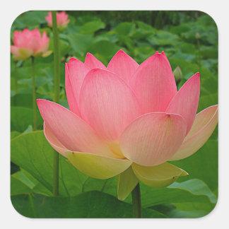 Heiliger Lotos-Blume Quadratischer Aufkleber