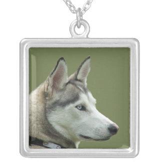 Heiserer sibirischer Hundeschöne Fotohalskette, Versilberte Kette