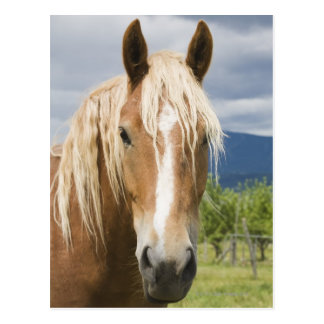 Hellbraunes Pferd Postkarte