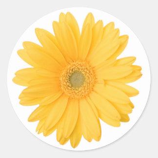 Helle gelbe Gerbera-Gänseblümchen-Blume Runder Aufkleber