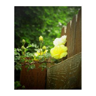 Helle gelbe Rosen und Zaun oder machen Ihre Acryl Wandkunst
