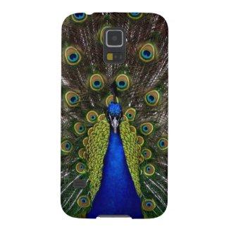 Bright girly pretty peacock bird
