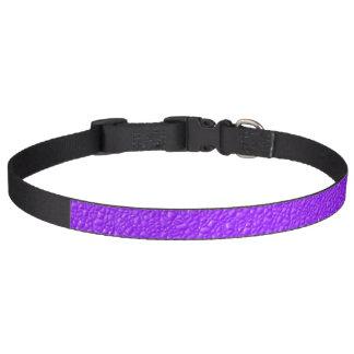 Helle lila Trendy Neonfarben Haustierhalsband