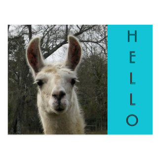"Helle niedliche ""hallo"" Lama-Postkarte N Postkarte"