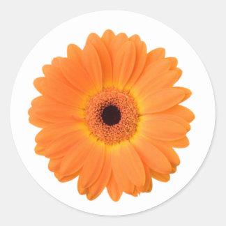 Helle orange Gerbera-Gänseblümchen-Blume Runder Aufkleber