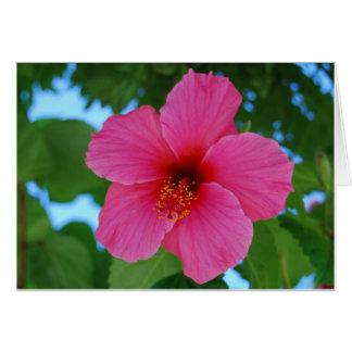 Helle rosa Hibiskus-Gruß-Karte Karte