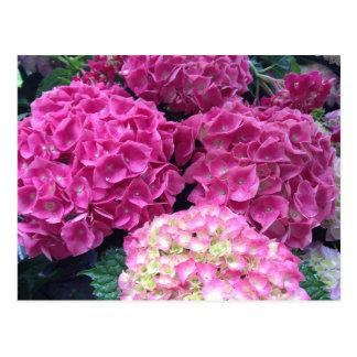 Helle rosa Hydrangea-Blumen Postkarte