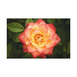 Helle Rose Leinwanddruck