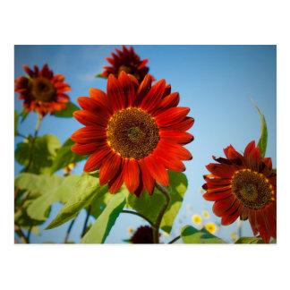 Helle rote Blumen im Sun Postkarte