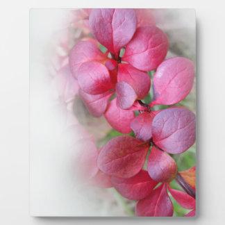 helle rote Broschüren Fotoplatte