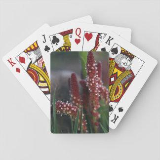 Helle rote GebirgsBlumen Spielkarten