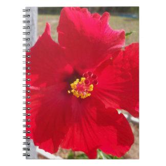 helle rote tropische Hibiskus-Blume Spiral Notizblock