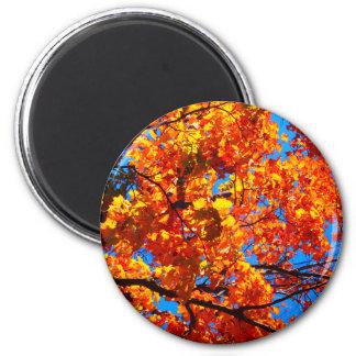 Heller orange Herbst verlässt Foto Runder Magnet 5,1 Cm