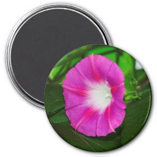 Heller rosa Winden-Blumen-Magnet Runder Magnet 7,6 Cm