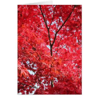 Heller roter japanischer Ahornbaum Karte