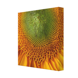 Heller Sonnenblume-Leinwanddruck Leinwanddruck