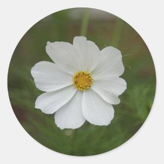Heller, weißer Kosmos-Blumen-Fotodruck Runder Aufkleber