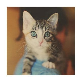 Helles blaues mit Augen Kätzchen Holzdruck