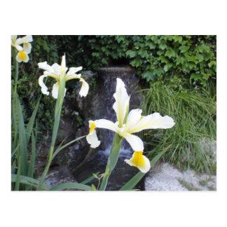 Hellgelbe Iris Postkarte