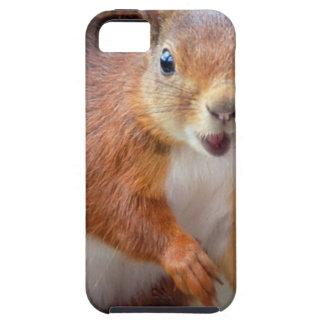 Hello Squirrel - Photography Jean-Louis Glineur Hülle Fürs iPhone 5