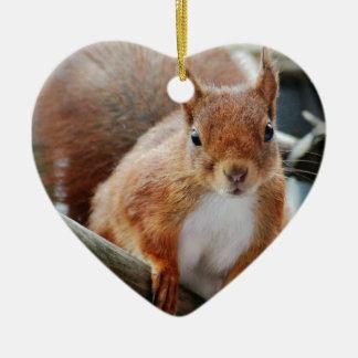 Hello Squirrel - Photography Jean-Louis Glineur Keramik Ornament