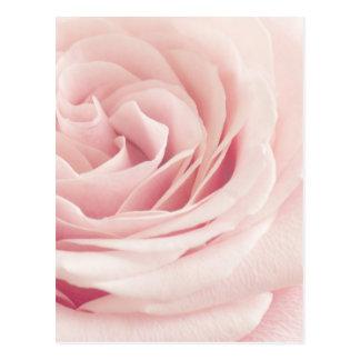 Hellrosa Rosen-Blume - Rosen-Blumen mit Blumen Postkarte