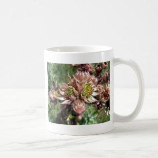 Henne- und Küken(Sempervivum) Blumen Kaffeetasse