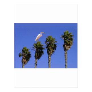 Henry der Reiher+PalmTrees Postkarte