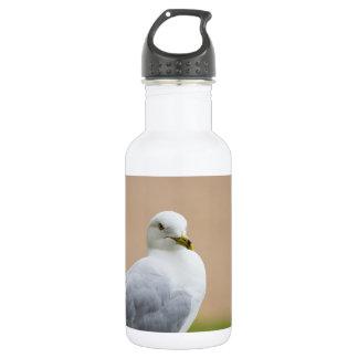Heraus schauen trinkflasche