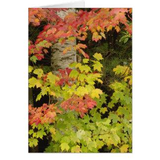 Herbst-Ahornbäume und Birkenbaum, weiß Karte