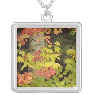 Herbst-Ahornbäume und Birkenbaum, weiß Versilberte Kette