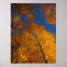 Herbst auf Ojito Nebenfluss Poster