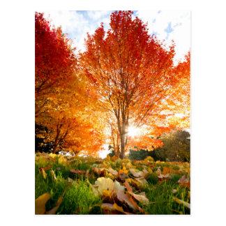 Herbst-Bäume Postkarte